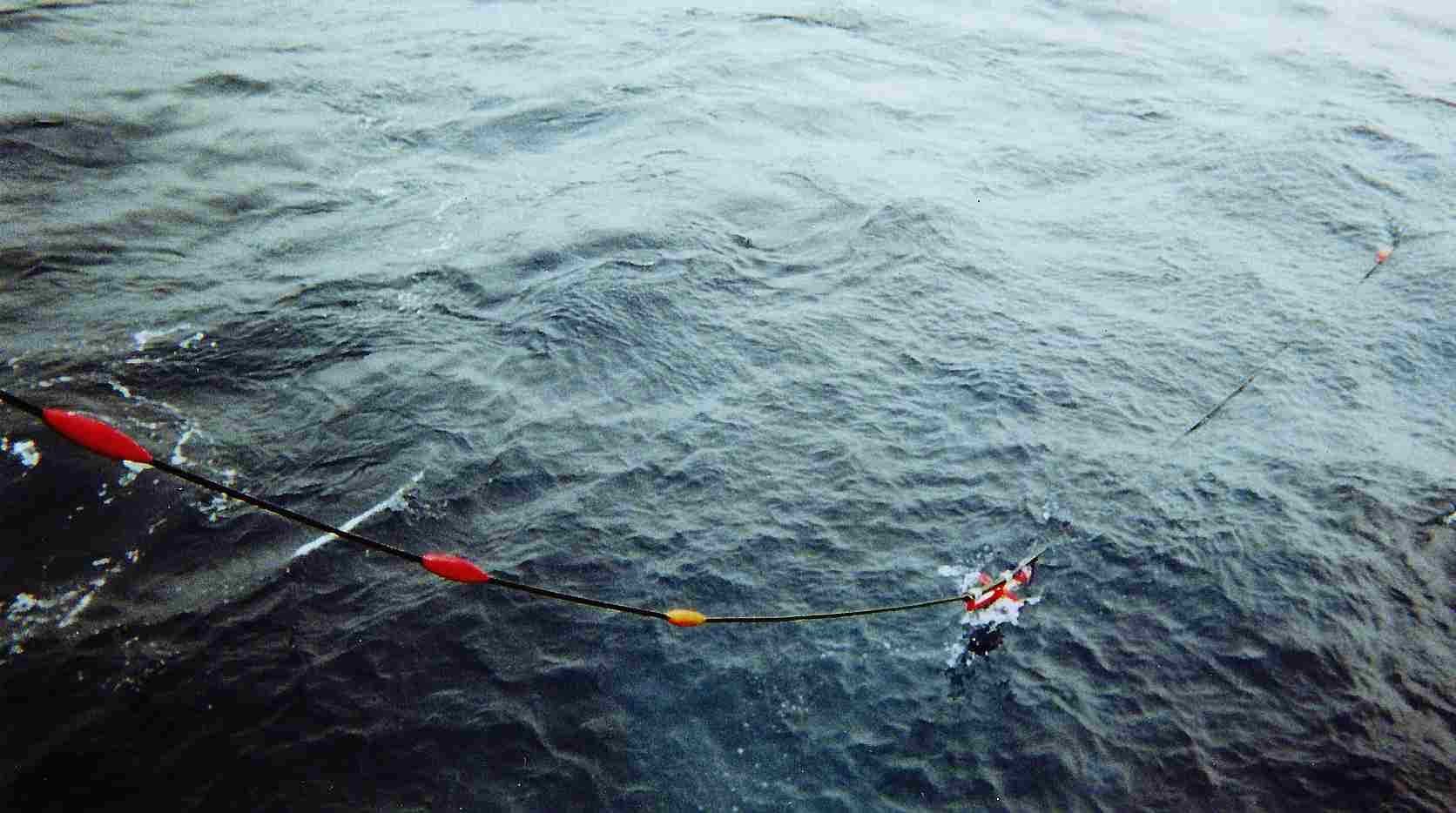 Solid streamer cable towed hydrophone array